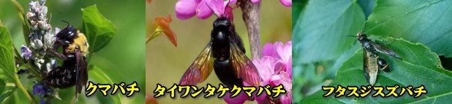 家に穴を開けるハチ